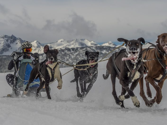 Canicross-Bikejoring-Mushing