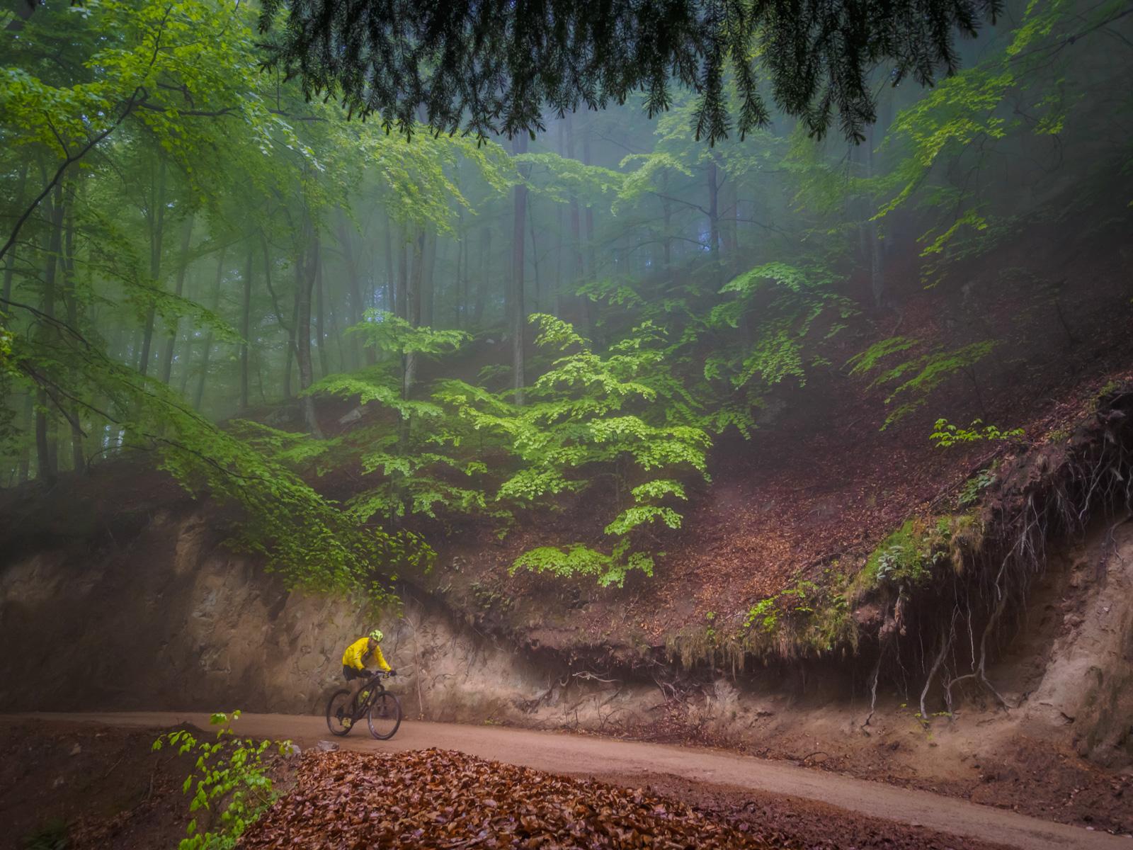 Llum màgica als boscos del Montseny - Ultra Bike