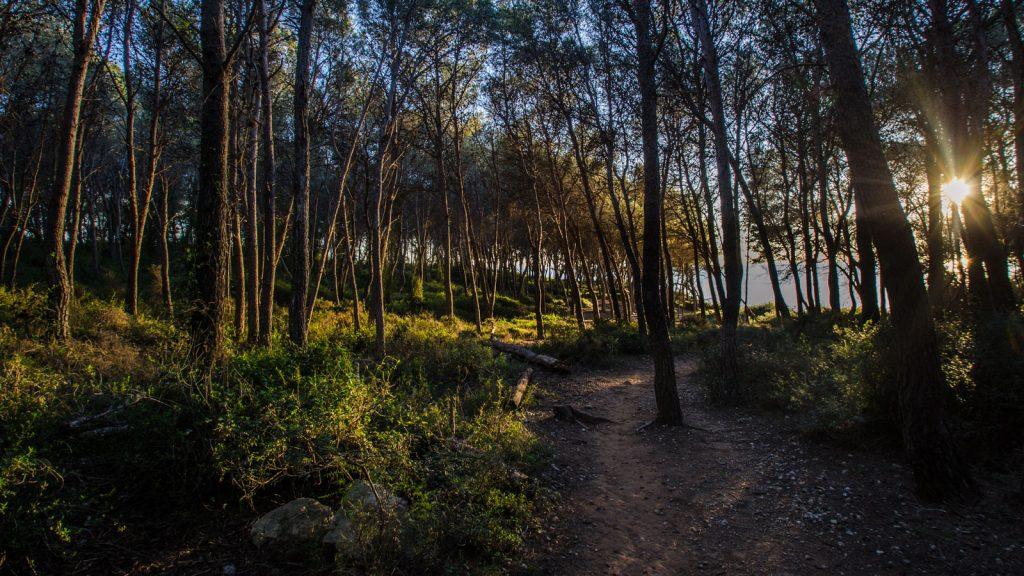 Un instant al Bosc de la Marquesa