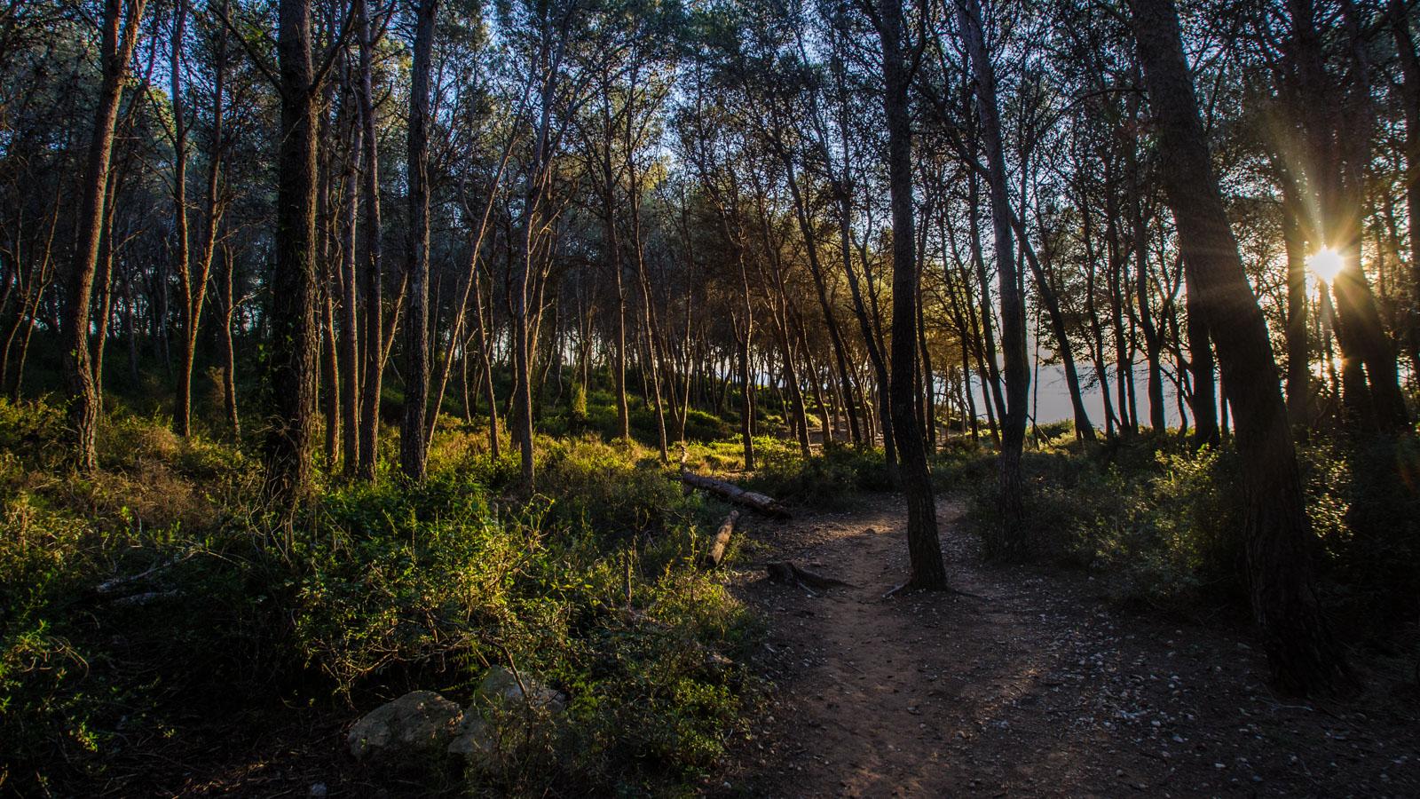 Un instant al Bosc de la Marquesa (Costa Daurada-Tarragona)